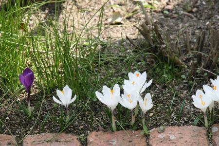 2011-03-19_07.jpg