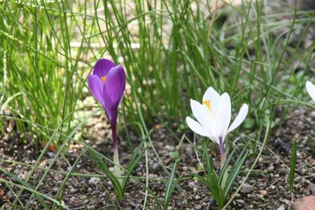 2011-03-19_12.jpg