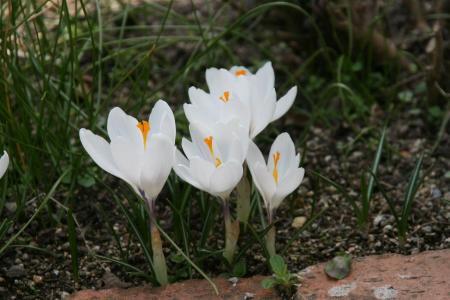 2011-03-19_13.jpg
