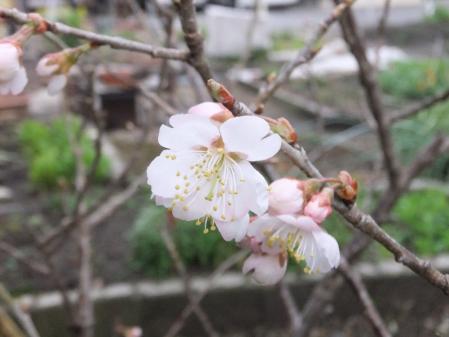 2011-03-21_43.jpg