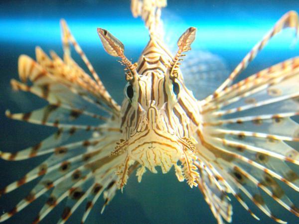 サンピアザ水族館3
