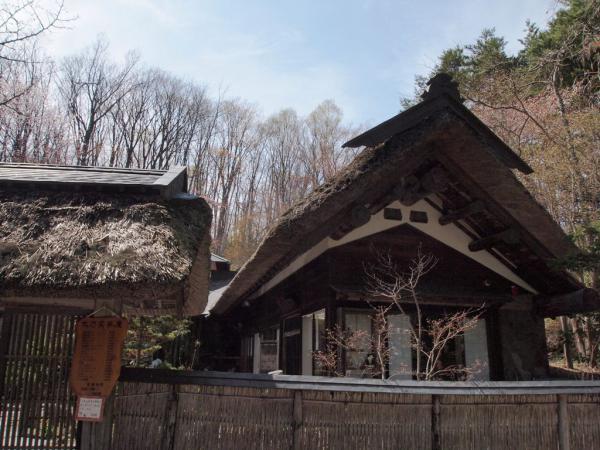 紅桜公園4