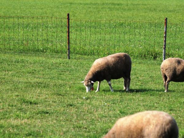羊ヶ丘展望台1