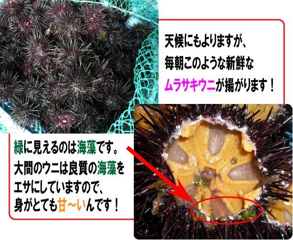 魚忠 大間産 塩ウニ
