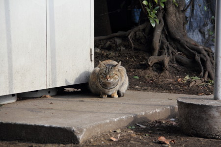 荒川線猫2