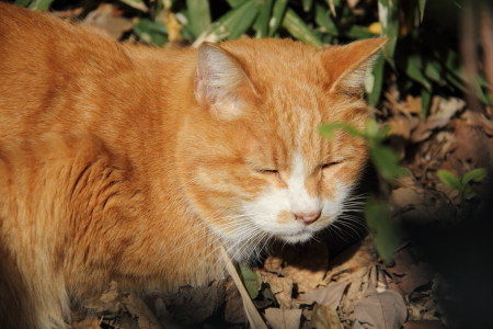 荒川線猫1