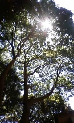 鹿島神社の木々