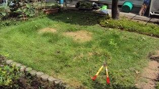 解体後の芝生はぼさぼさ