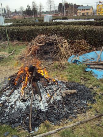 焼却作業と剪定枝の山