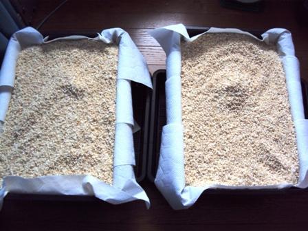 米麹 各5kg