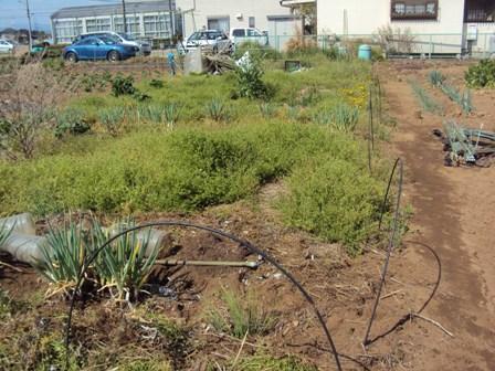 野草で覆われる畑