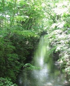 玉川上水の清流