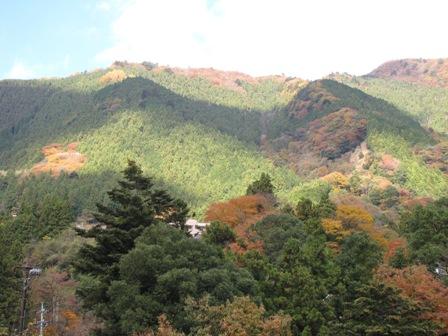 紅葉と景色