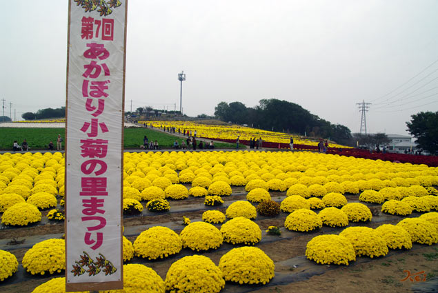 091024小菊の里01