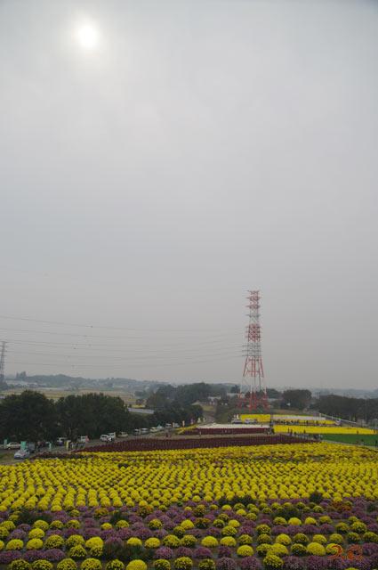 091024小菊の里11