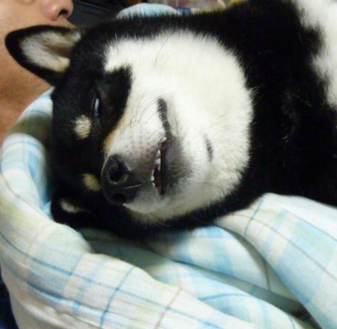 シアワセな寝顔