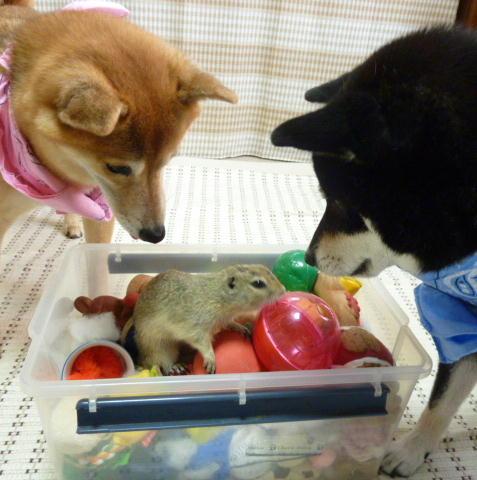おもちゃ箱のソンさん