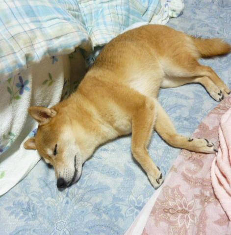 台風の夜 コロ
