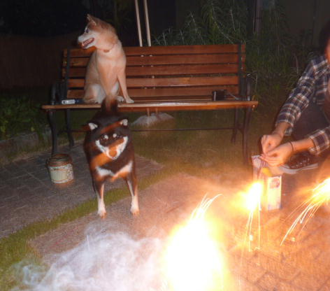 お庭で花火 1
