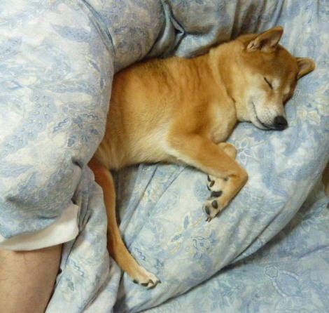 パパと寝る