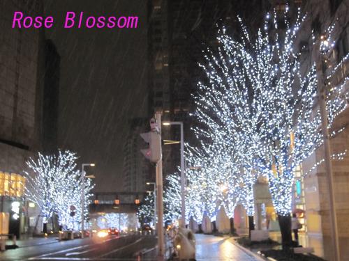 けやき坂雪20100201