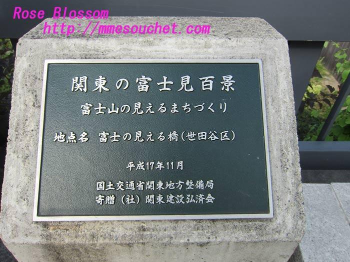 201108172.jpg