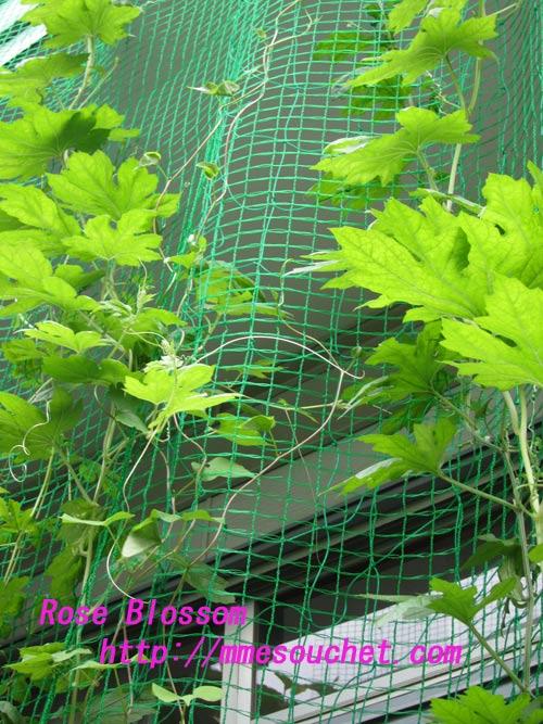 greencarten201108013.jpg