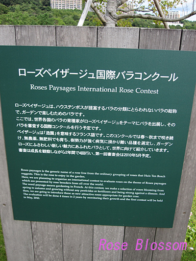 rose-contest-board.jpg