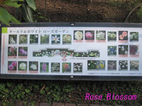 roseboard201002091.jpg