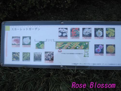 rosegarden201002092.jpg