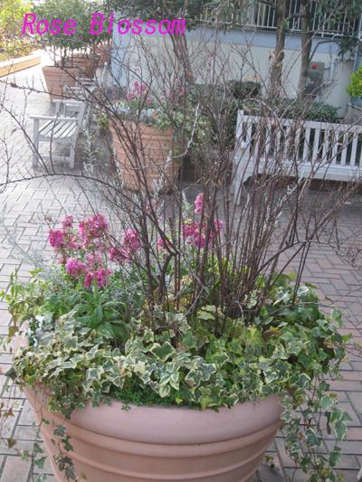 rosegarden201002093.jpg