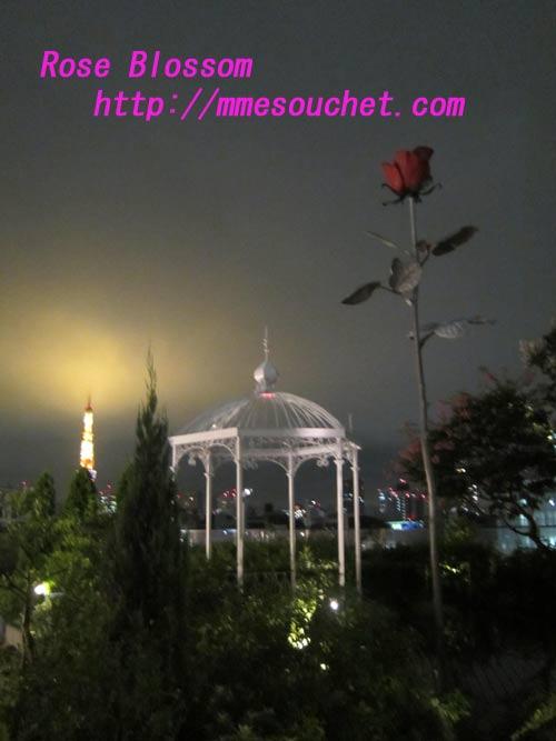 rosesspot20110826.jpg