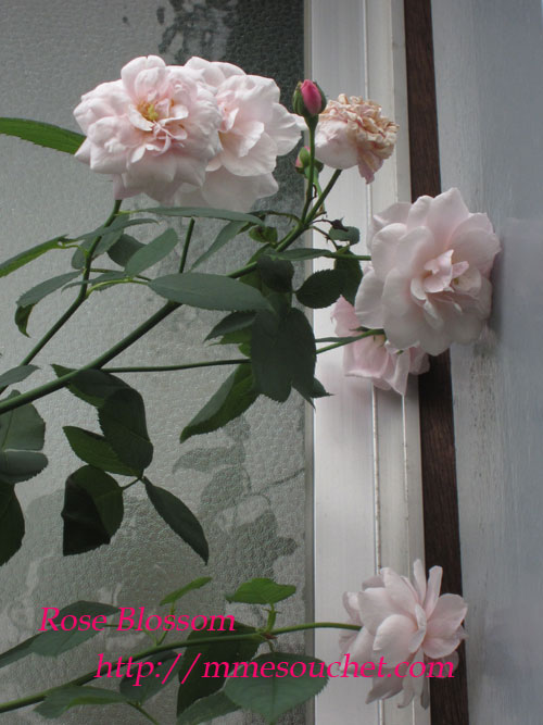 souchet201108031.jpg