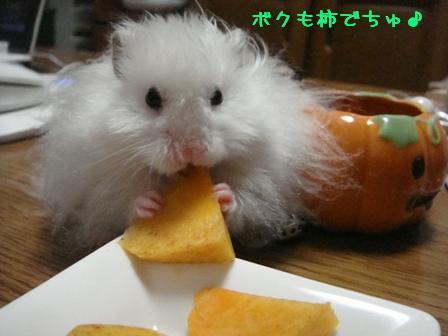 ボクも柿でちゅ♪