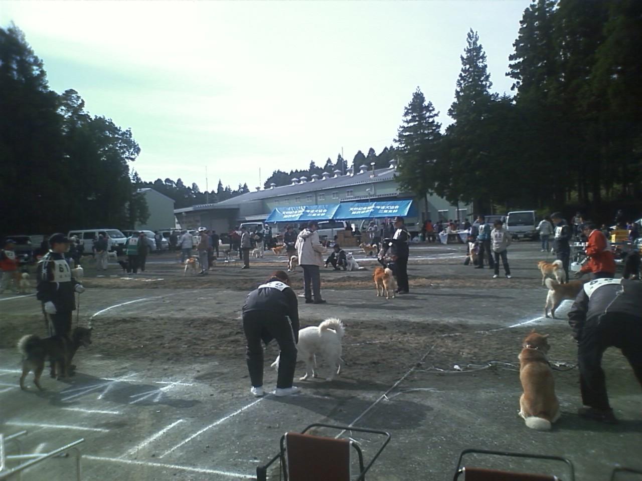 北海道犬品評会