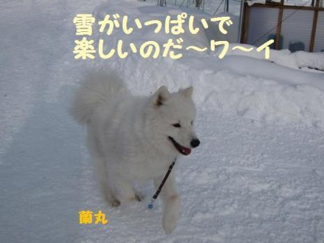 2010 1 3 run5