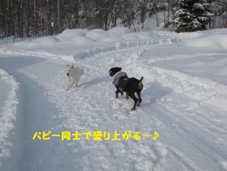 2010 1 3 run6