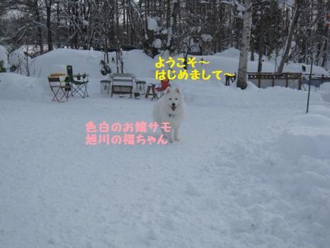 2010 1 3 run10