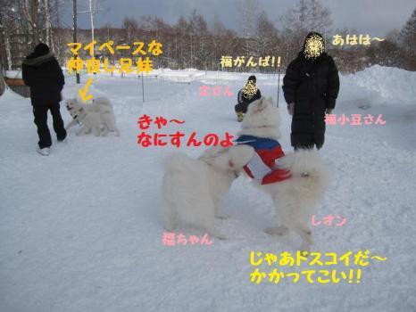 2010 1 3 run22