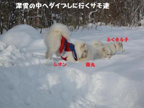 2010 1 3 snow1