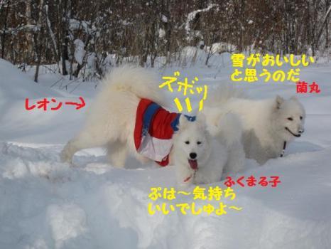 2010 1 3 snow2
