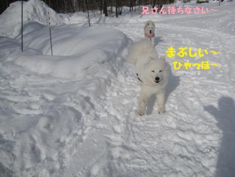 2009 1 30 dog2