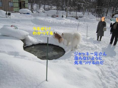 2010 1 30 dog2