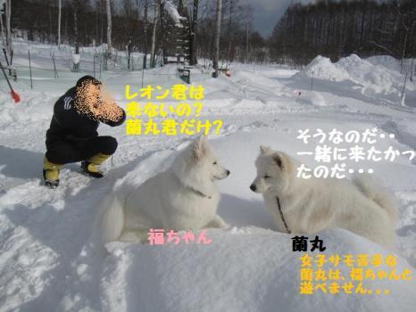2010 1 30 dog3