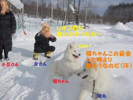 2010 1 30 dog4