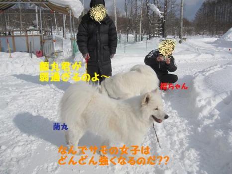 2010 1 30 dog5
