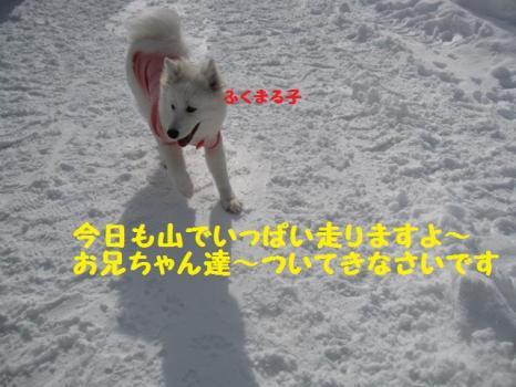 2010 1 30 dog6