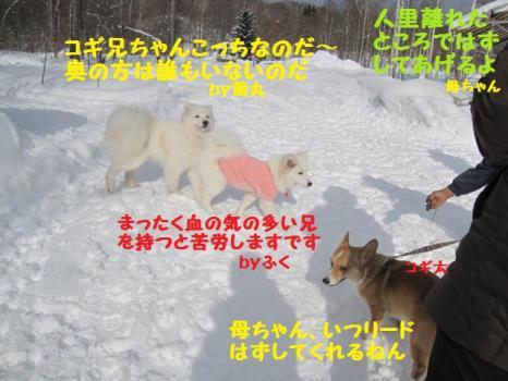 2010 1 30 dog7