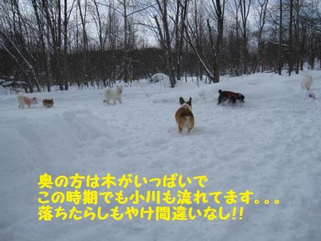 2010 1 30 dog9