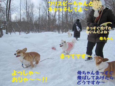 2010 1 30 dogs1